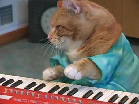 Keyboard-Cat-REINCARNATED-