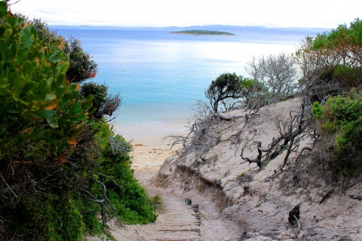 Top 5 Must-dos in Tasmania