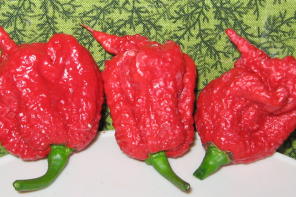 The World's Hottest Chilli Taste Test