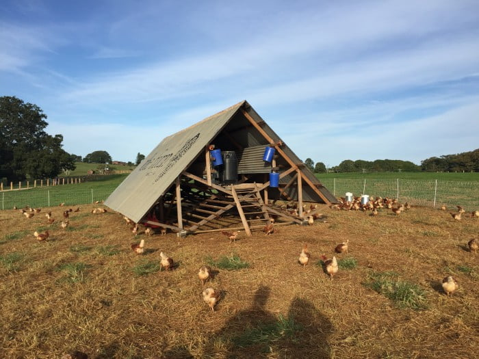 The Farm_Chicken Coup