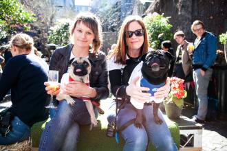 Sydney Dog Friendly Pubs - Feature