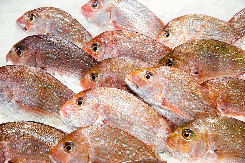 online fish market snapper