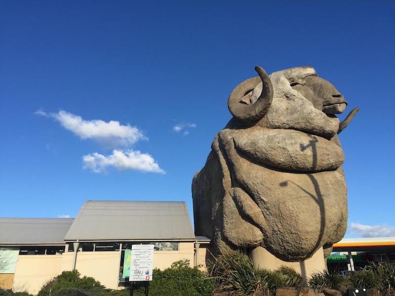 goulburn-giant-ram