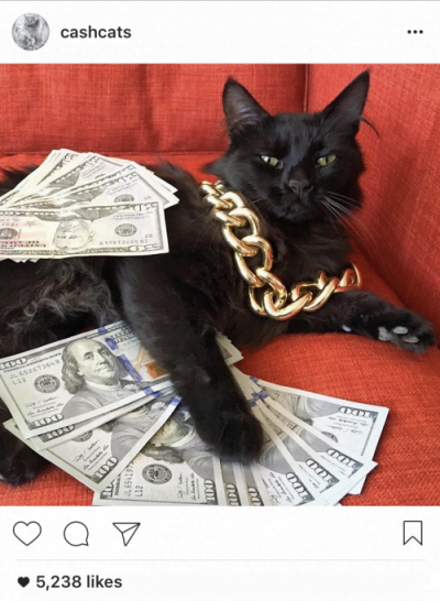 instagram-cash-cats
