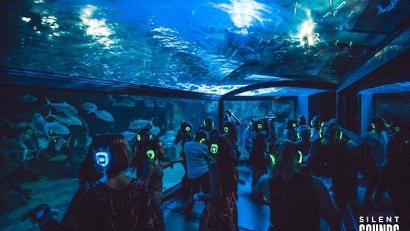 SEA LIVE dancing