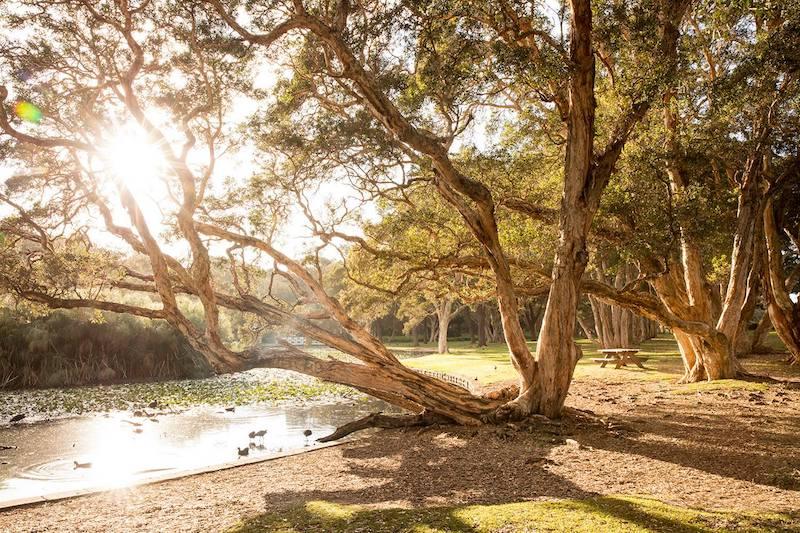 Sydney's best picnic spots centennial parklands