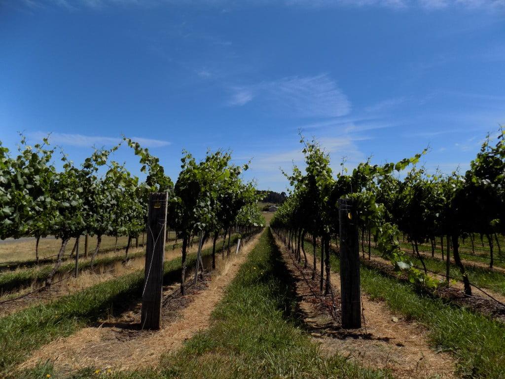 orange NSW vineyards