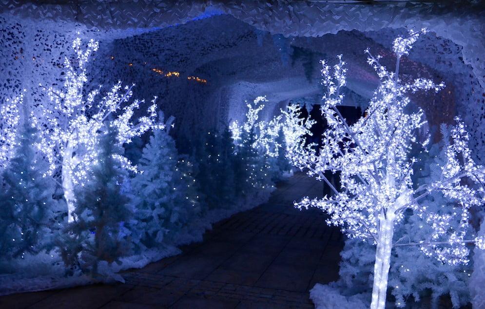 Winter-Festival-Trees