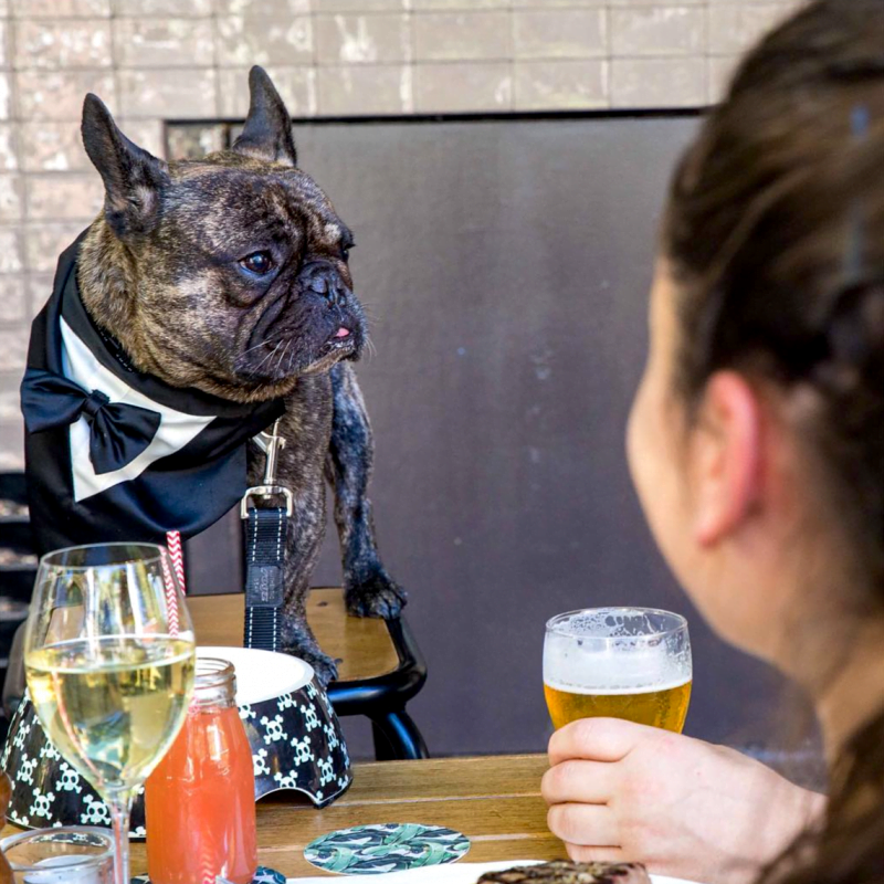 Sydney Dog Friendly Pubs - The Carrington