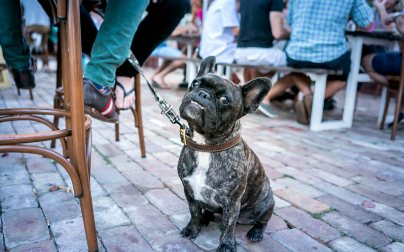 Sydney Dog Friendly Pubs - The Greens