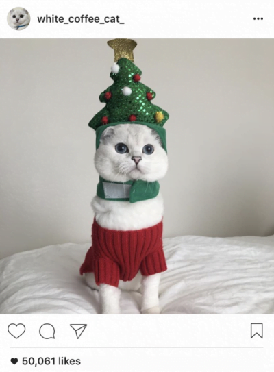 instagram white coffee cat