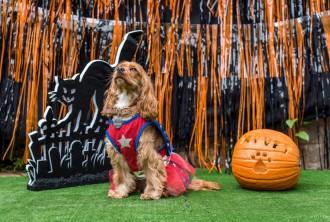 halloween animal runway